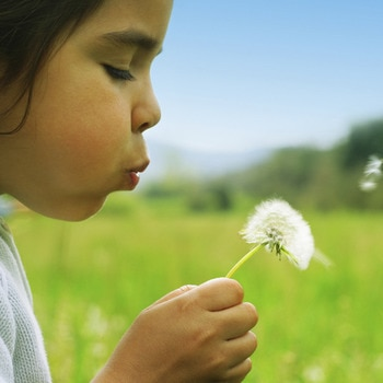 Child blowing on flower