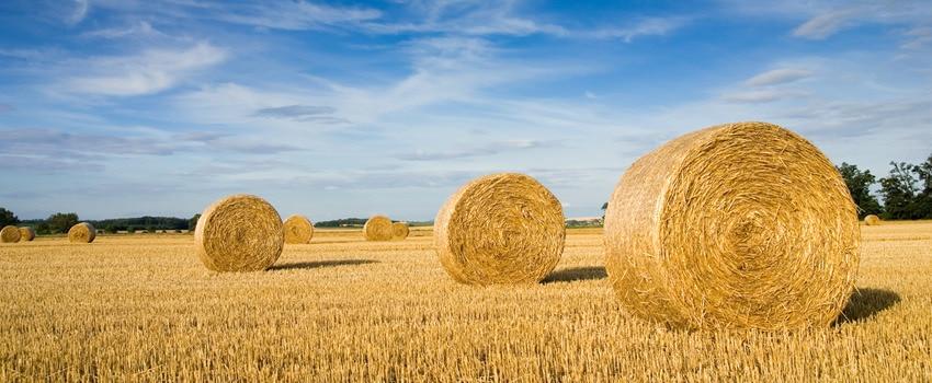 wheatstalkfield-original.jpg